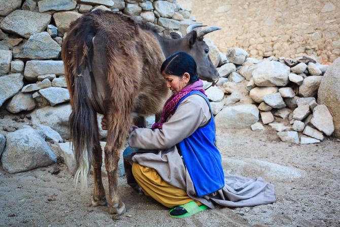 Himalaya Homestays_Ladahk_dormir casas particulares_02