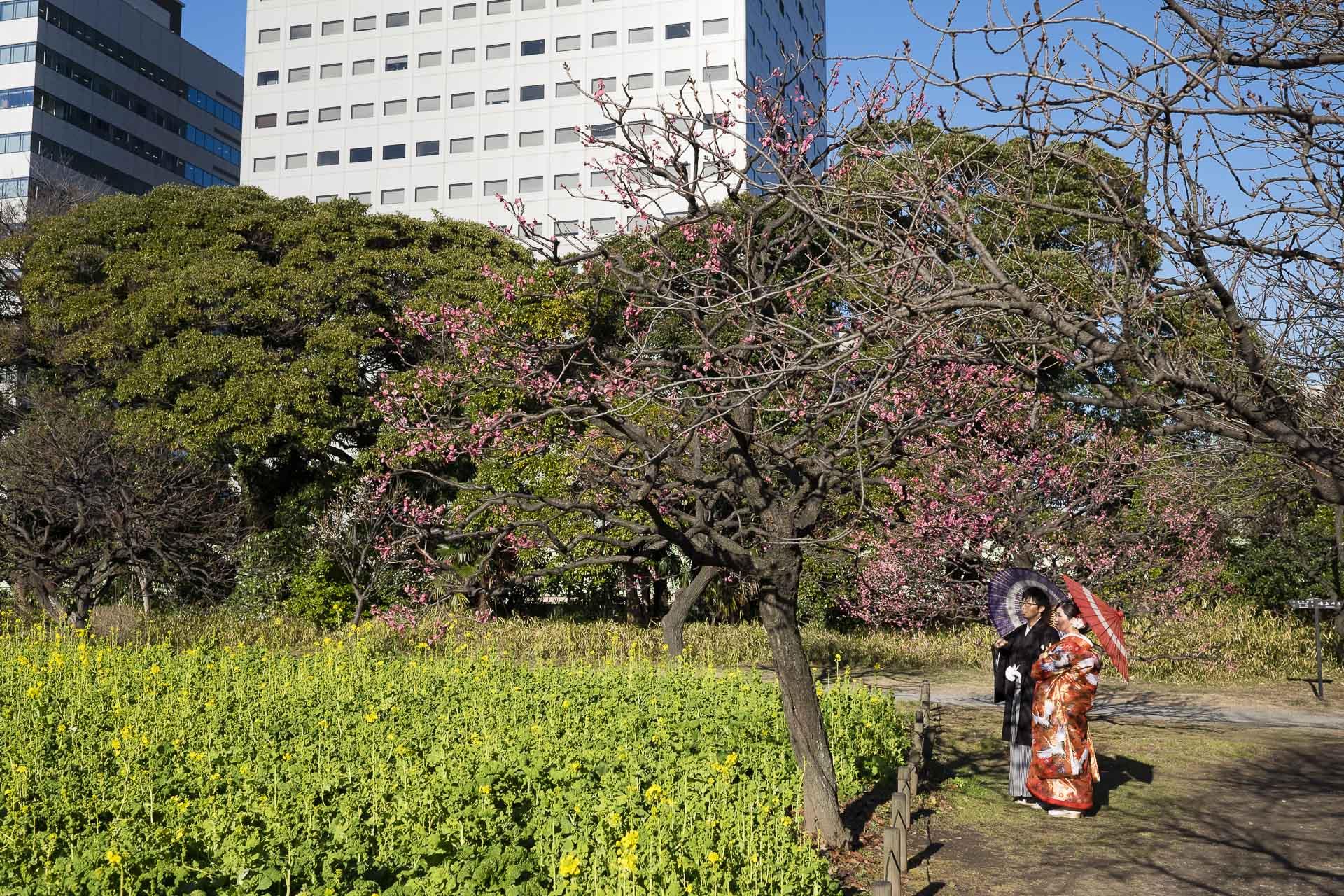 Japon_Tokio_37